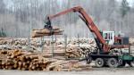 Canada logging damages environment